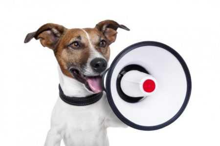 Закон о содержании собак в частном доме